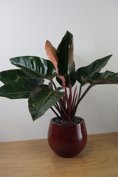 Philodendron from Metropolitan Plant & Flower Exchange, local NJ florist