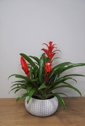 Bromeliad from Metropolitan Plant & Flower Exchange, local NJ florist