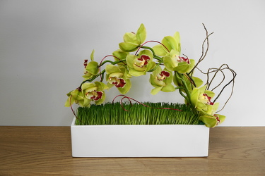 Cascading Cymbidium from Metropolitan Plant & Flower Exchange, local NJ florist