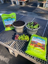 Cold-Crop Container Lettuce Starter Kit from Metropolitan Plant & Flower Exchange, local NJ florist