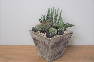 Mini Cactus Garden from Metropolitan Plant & Flower Exchange, local NJ florist