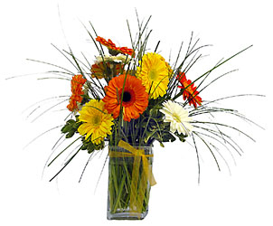 Delightful Daisies from Metropolitan Plant & Flower Exchange, local NJ florist