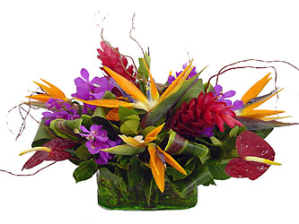 Exotic Collection from Metropolitan Plant & Flower Exchange, local NJ florist