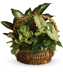 Emerald Garden Basket from Metropolitan Plant & Flower Exchange, local NJ florist