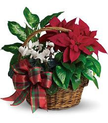 Holiday Homecoming from Metropolitan Plant & Flower Exchange, local NJ florist