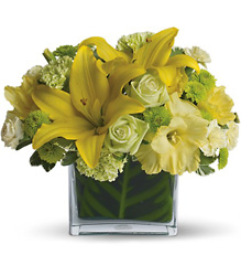 Oh Happy Day from Metropolitan Plant & Flower Exchange, local NJ florist