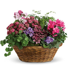 Basket of Blooms from Metropolitan Plant & Flower Exchange, local NJ florist
