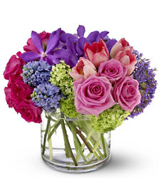 Sweet Spring from Metropolitan Plant & Flower Exchange, local NJ florist