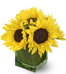 Modern Sunshine from Metropolitan Plant & Flower Exchange, local NJ florist