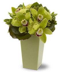 Luxurious Green from Metropolitan Plant & Flower Exchange, local NJ florist