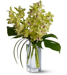 Orchid Elegance from Metropolitan Plant & Flower Exchange, local NJ florist