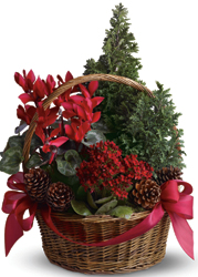 Metro Tannenbaum.Metropolitan Plant And Flower Exchange Fort Lee West Orange