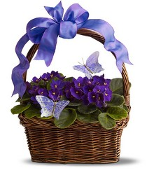 Violets & Butterflies from Metropolitan Plant & Flower Exchange, local NJ florist