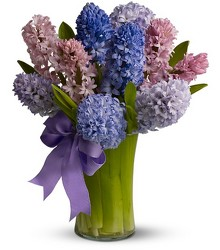 Fragrant Hyacinth from Metropolitan Plant & Flower Exchange, local NJ florist