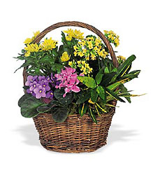 European Basket from Metropolitan Plant & Flower Exchange, local NJ florist