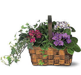African Violet Basket from Metropolitan Plant & Flower Exchange, local NJ florist