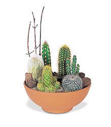 Cactus Garden from Metropolitan Plant & Flower Exchange, local NJ florist