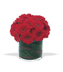 Gerbera Mound from Metropolitan Plant & Flower Exchange, local NJ florist