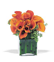 Bronze Callas from Metropolitan Plant & Flower Exchange, local NJ florist